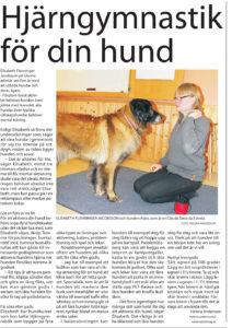 Träna hunden mentalt- artikel om Glanna i Västerås tidning