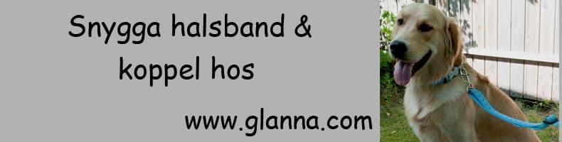 Snygga hundhalsband och hundkoppel hos Glanna