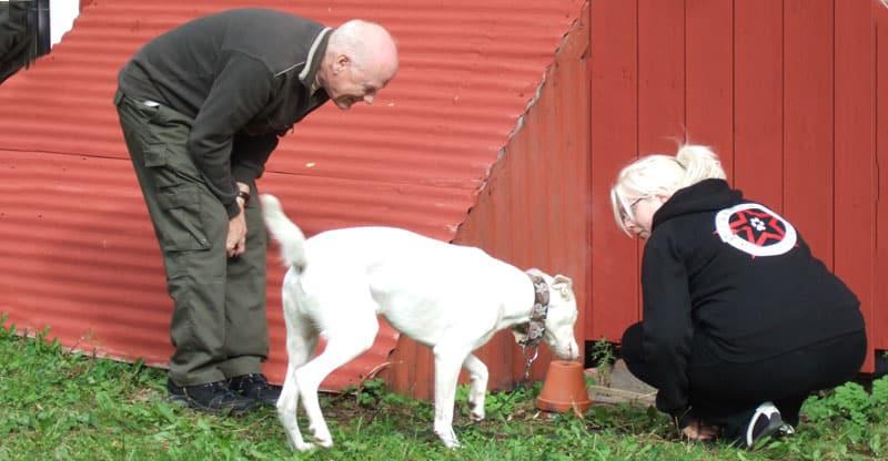 Hundpsykologen Anders Hallgren håller hundkurs