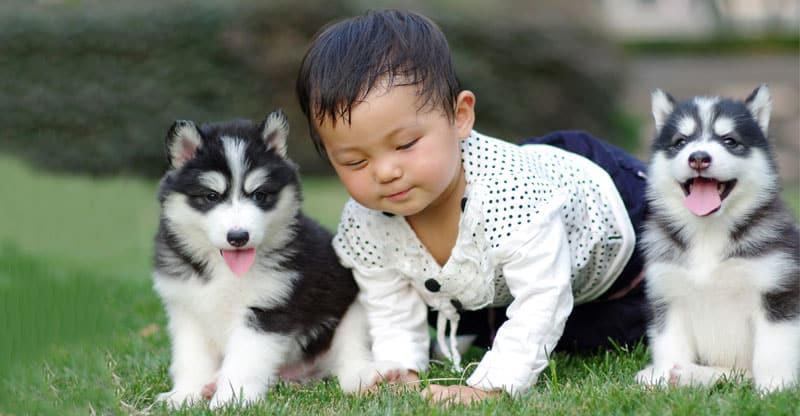Baby med två valpar