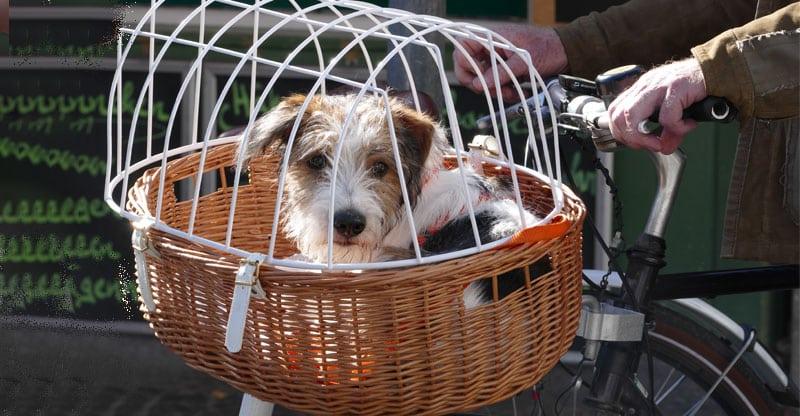 Cykla med hunden i en cykelkorg