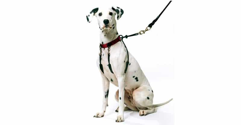 Hund med antidrag-sele