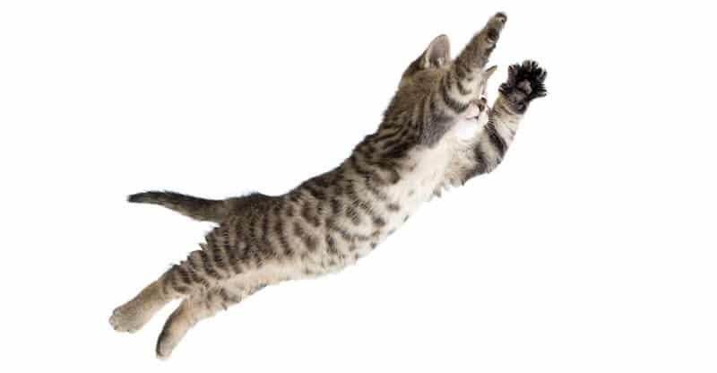 Fallande katt