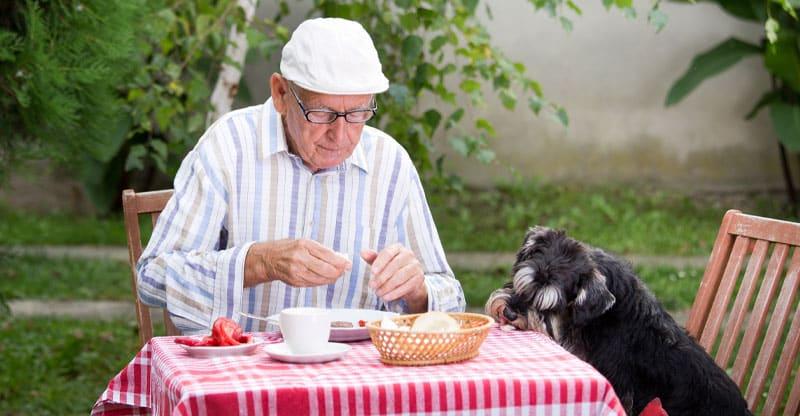 Äldre man sitter vid bordet med sin Schnauzer