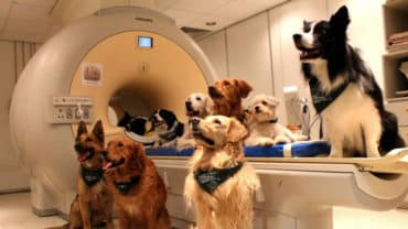 Glada hundar sitter vid en magnetröntgen