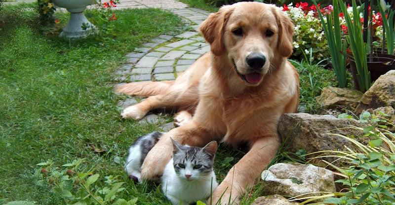 En katt ligger mellan tassarna på en hund