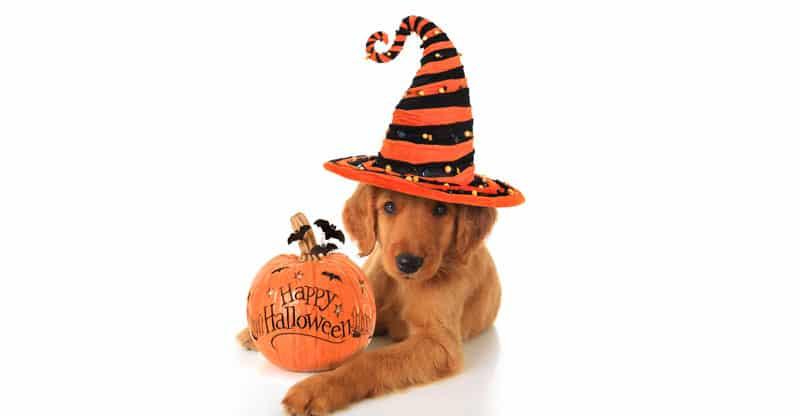 Hund och Happy Halloween