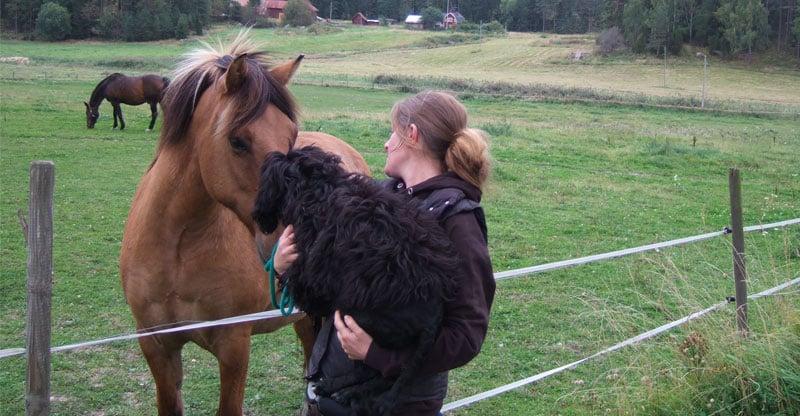 Hund hälsar på en häst