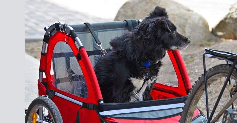 Hund åker i cykelkärra