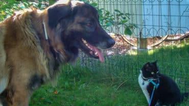 Hunden Astra och katten Tessan