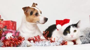 Hund och katt vid julfirande