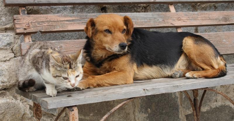 Hund och katt ligger på en parkbänk