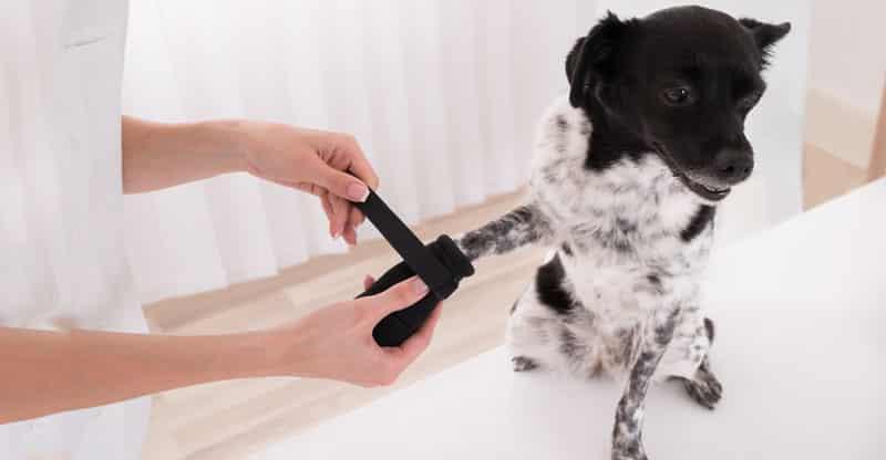 Hund med hundsko