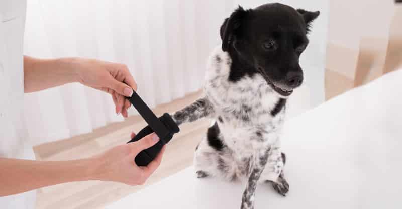 Hund får en hundsko