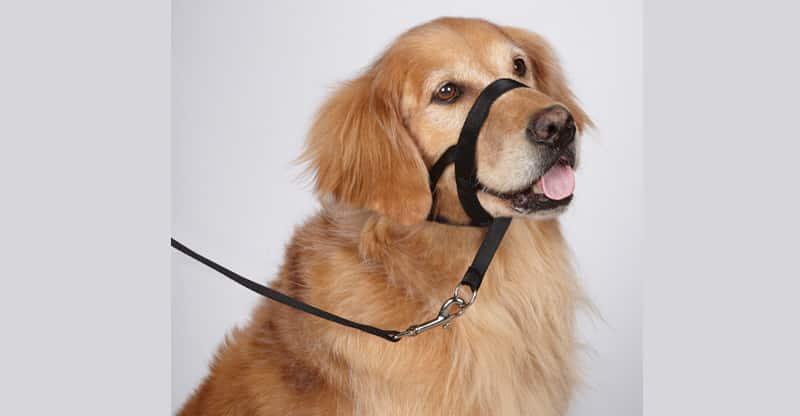Nosgrimma på en hund