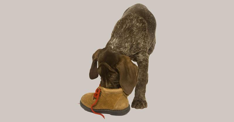 rena tassar eller skor