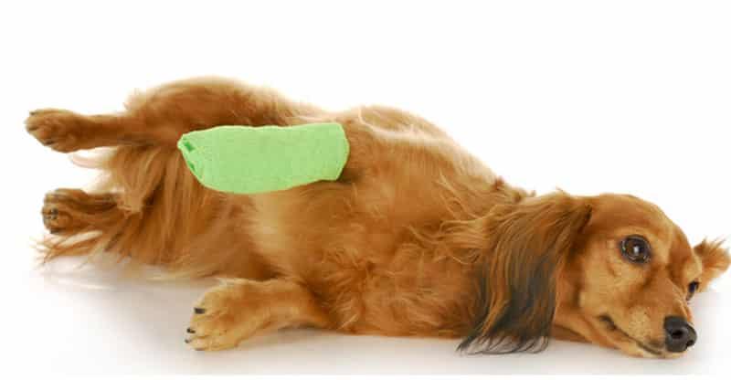 Hund med skadad tass