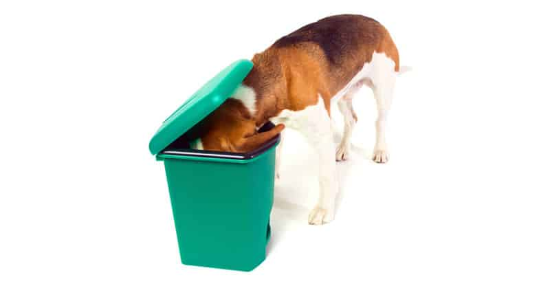 Hund luktar i en papperskorg