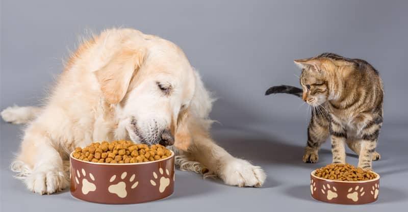 En hund och katt som får mat tillsammans