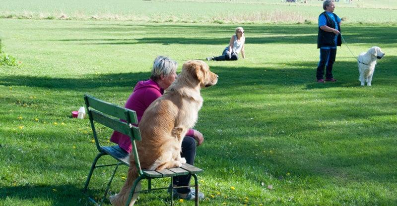 Kvinna sitter på en bänk med sin hund
