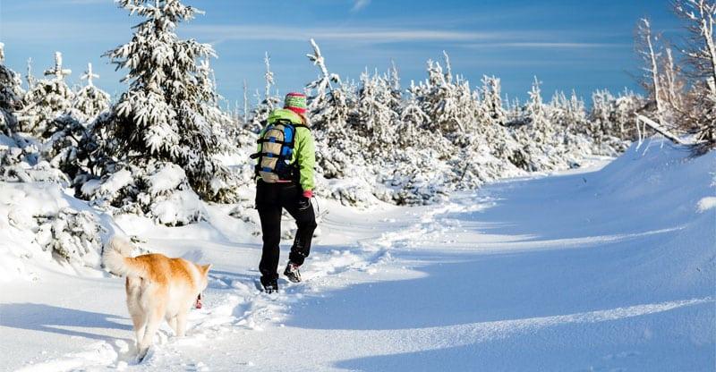 Hund och person vandrar i snötäckt landskap