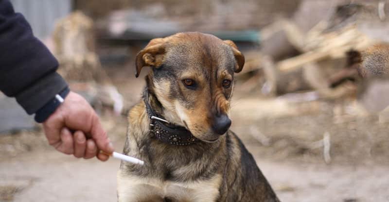 Hund morrar åt en cigarett