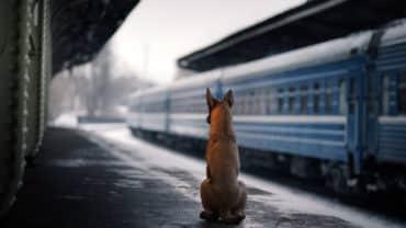 Hund sitter på perrongen på en tågstation