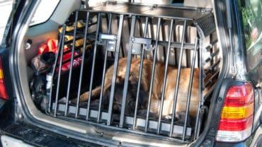 Hund som sover i sin bur bak i bilen