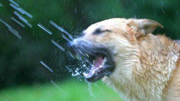 Hunden dricker vatten från en slang