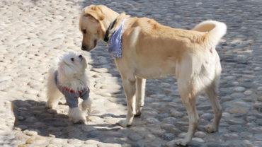 Hundmöte med två hundar