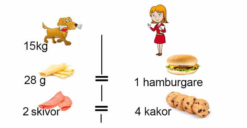 Illustration över mat hund kontra männsika