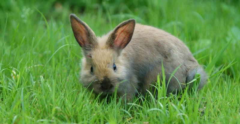Kanin sitter i gräset