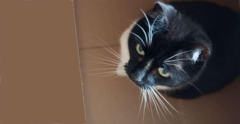 Katten Tessan med sina morrhår