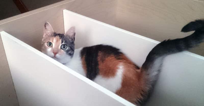Katt busar i en liggande bokhylla