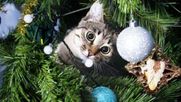 Katt klättrar i julgranen