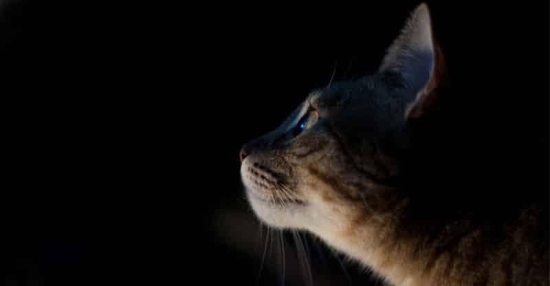 Katt i mörkret