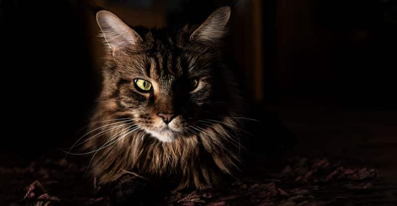 Vaken katt i mörkret
