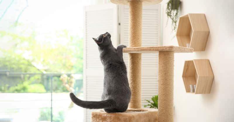 Katt på väg upp i ett klösträd