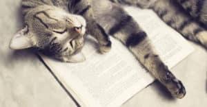 Katt ligger på en bok