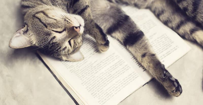 Katt ligger och sover på en bok