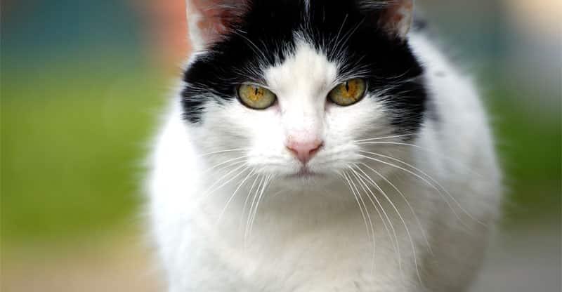 Katt i närbild