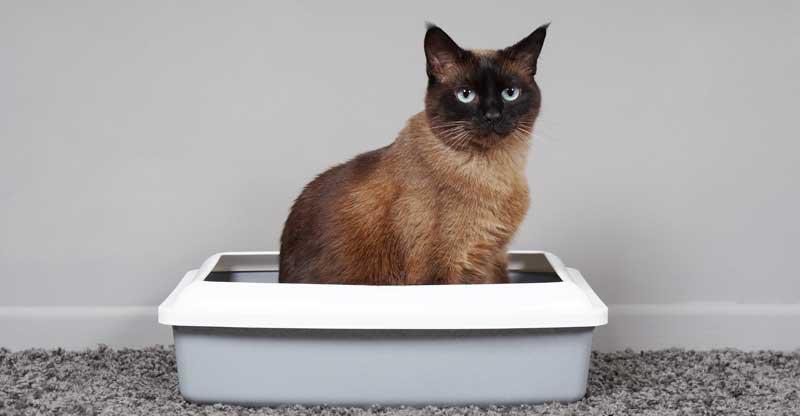Katt som sitter i sin kattlåda