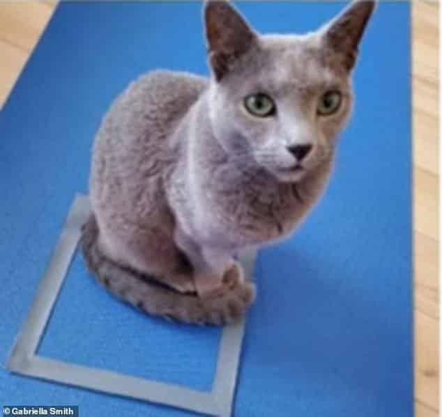 Katt sitter i kvadrat