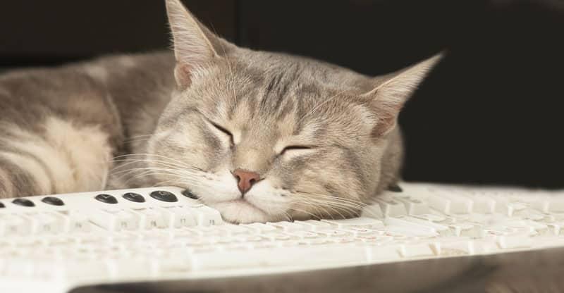 Katt sover på ett tangentbord