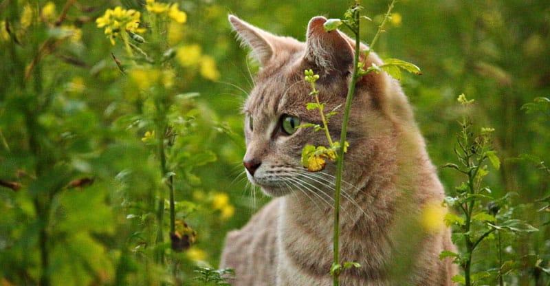 Katt spanar efter byte i gräset