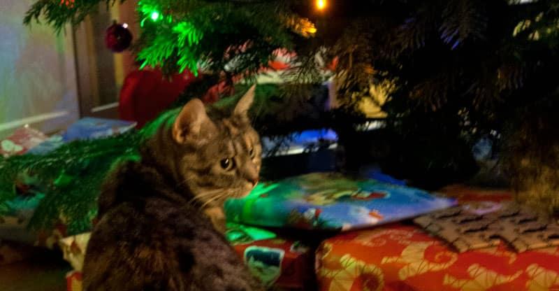 Katt sitter under julgranen med julklapparna