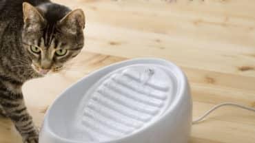 Kattfontän för vatten till katt- Lucky Kitty
