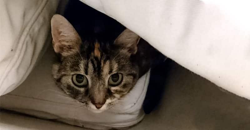 Katt som gömmer sig