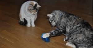 Katter med aktiveringsleksaken Cat pyramid