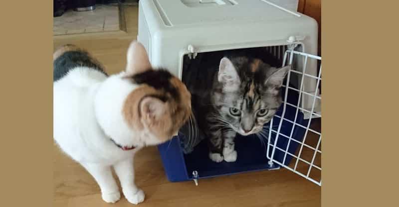 Två katter undersöker en kattbur